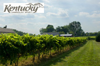 Kentucky Wineries & Vineyards